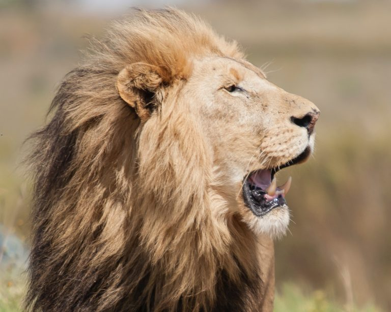 Alpha males are not what you think – Leaders are caring